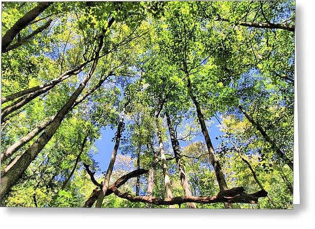 Climb Tree Greeting Cards - Forest Floor Greeting Card by Dan Sproul