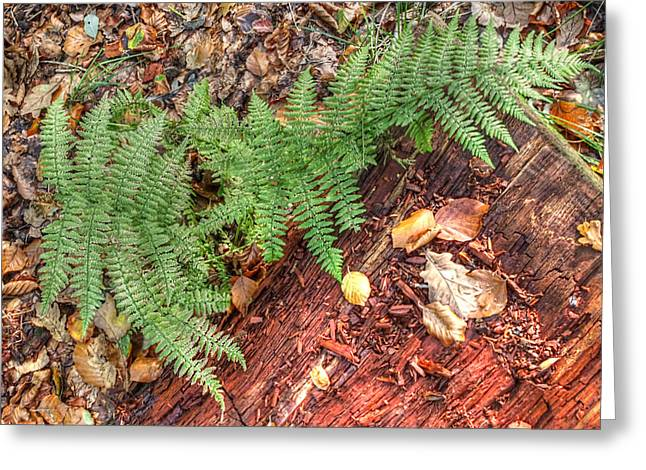Colourful Bark Greeting Cards - Forest Floor Ferns Greeting Card by Gill Billington