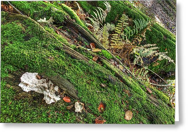 Forest Floor Greeting Cards - Forest Floor Fungi and Moss Greeting Card by Gill Billington