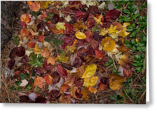 Turning Leaves Digital Art Greeting Cards - Forest Floor Greeting Card by Kathleen Bishop