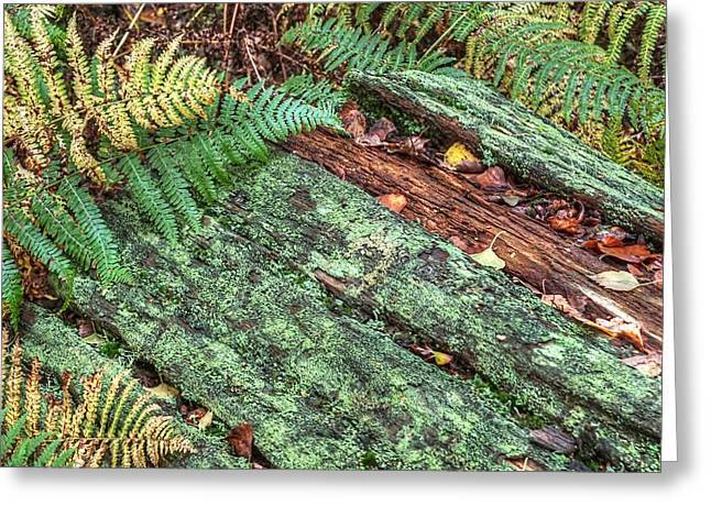 Colourful Bark Greeting Cards - Forest Floor Moss and Ferns Greeting Card by Gill Billington