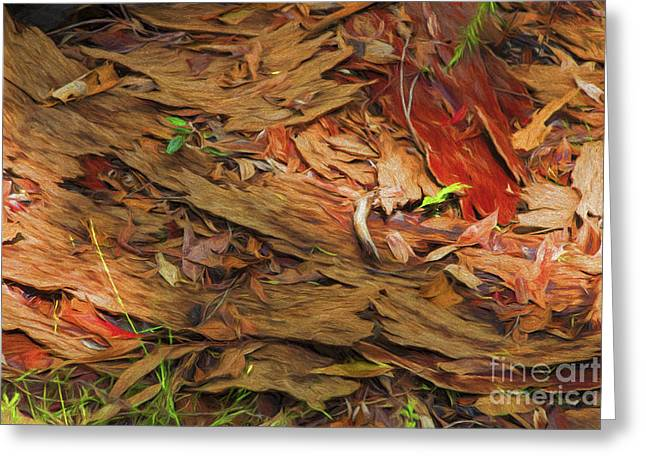 Forest Floor Greeting Cards - Forest floor Greeting Card by Sheila Smart