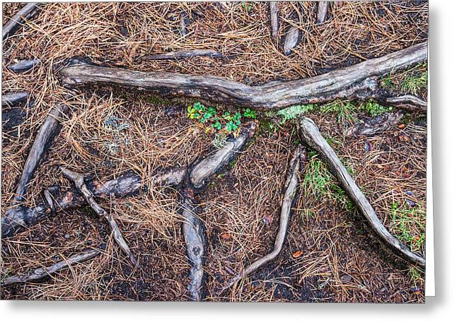 Forest Floor with Tree Roots Greeting Card by Matthias Hauser