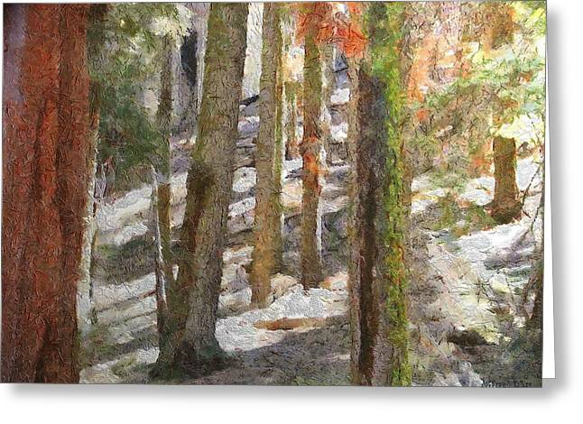 Sunlight Greeting Cards - Forest for the Trees Greeting Card by Jeff Kolker