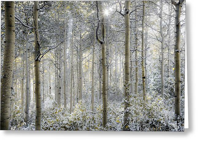 Forest Glow Greeting Card by Leland D Howard