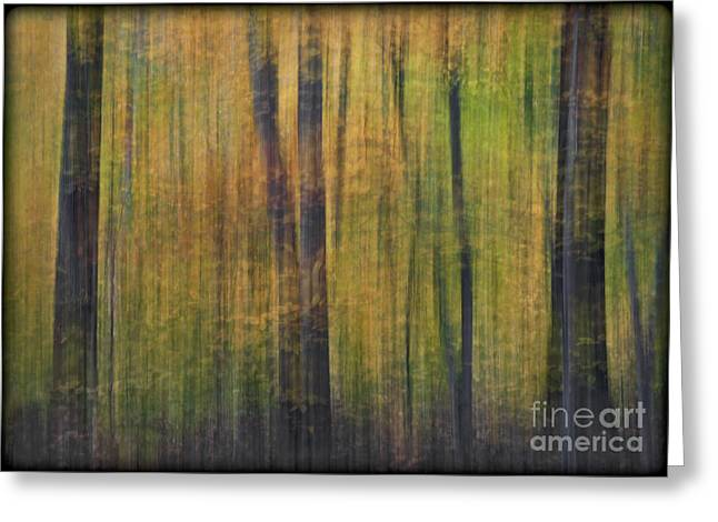 Foliage Greeting Cards - Forest Glow Greeting Card by Susan Candelario
