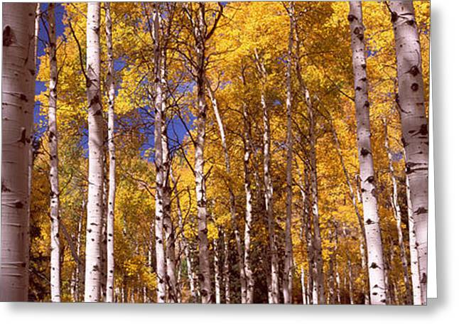 Autumn Colors Greeting Cards - Forest, Grand Teton National Park Greeting Card by Panoramic Images