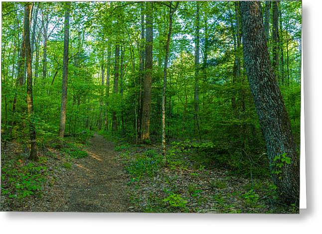 Smoky Greeting Cards - Forest, Great Smoky Mountains National Greeting Card by Panoramic Images