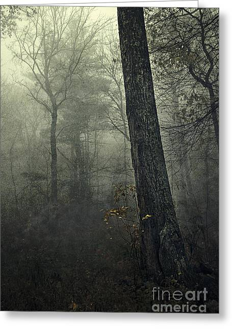 Dark Grey Greeting Cards - Forest Greeting Card by HD Connelly