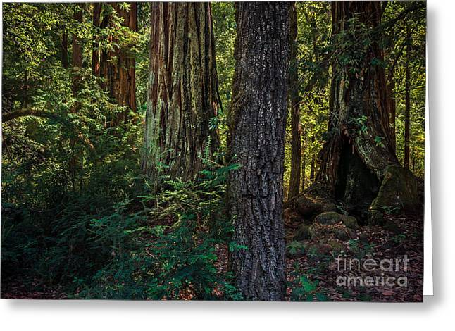 Big Basin Greeting Cards - Forest Impression Greeting Card by Alexander Kunz