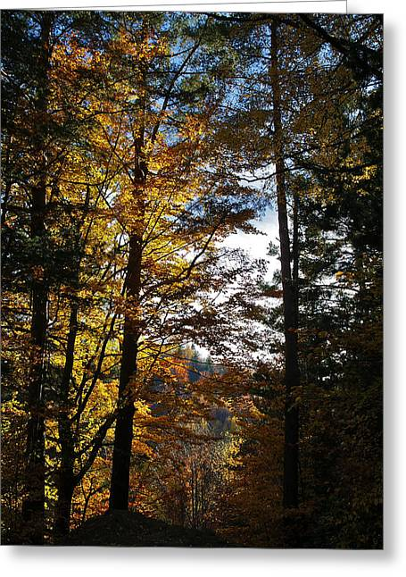 Bogdan M Nicolae Greeting Cards - Forest in Autumn Light Greeting Card by Bogdan M Nicolae
