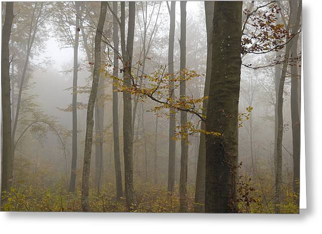 Forest in autumn Greeting Card by Matthias Hauser