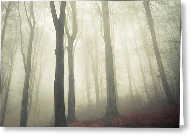 Dirk Wuestenhagen Greeting Cards - Forest in Fog Greeting Card by Dirk Wuestenhagen