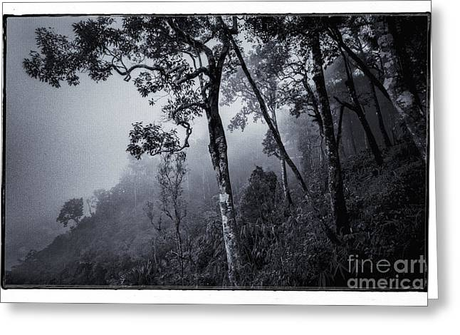 Woodland Scenes Greeting Cards - Forest in the fog Greeting Card by Setsiri Silapasuwanchai