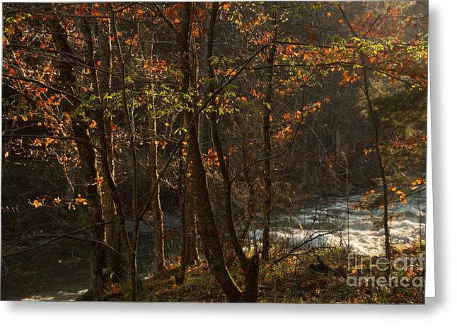 Beavers Bend Park Greeting Cards - Forest in the Mist Greeting Card by Iris Greenwell