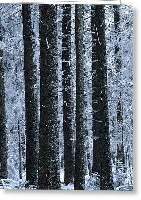 Cold Photographs Greeting Cards - Forest in winter Greeting Card by Bernard Jaubert
