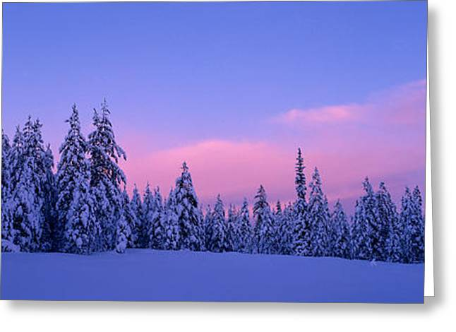 Conifer Tree Greeting Cards - Forest In Winter, Dalarna, Sweden Greeting Card by Panoramic Images