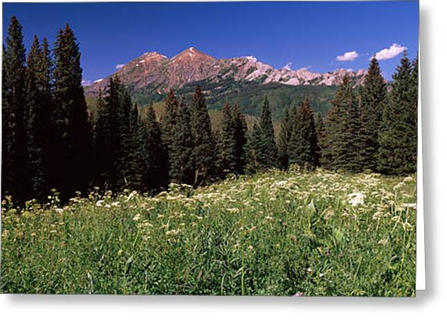 Days Pass Greeting Cards - Forest, Kebler Pass, Crested Butte Greeting Card by Panoramic Images