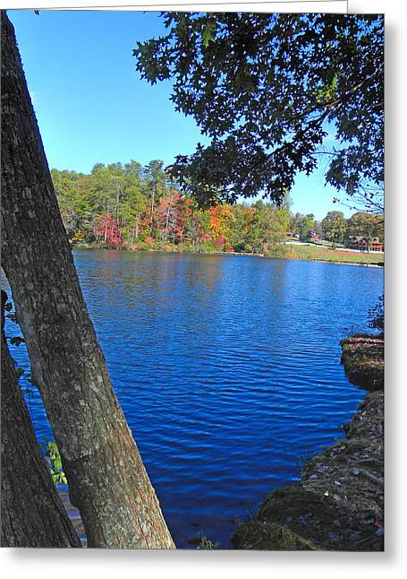 Larry Bishop Photography Greeting Cards - Forest Lake Greeting Card by Larry Bishop