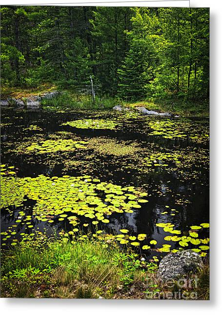 Landscape. Scenic Greeting Cards - Forest lake with lily pads Greeting Card by Elena Elisseeva