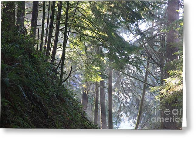 Dappled Light Greeting Cards - Forest Light 3 Greeting Card by Jeanette French