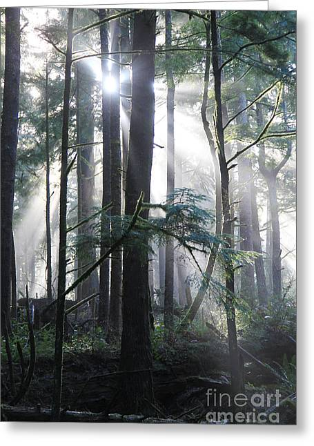 Dappled Light Greeting Cards - Forest Light 4 Greeting Card by Jeanette French