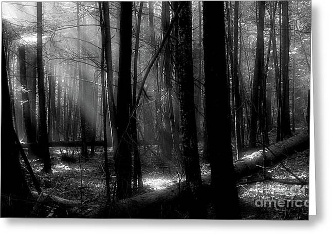 Tress Greeting Cards - Forest Light in Black and White Greeting Card by Douglas Stucky