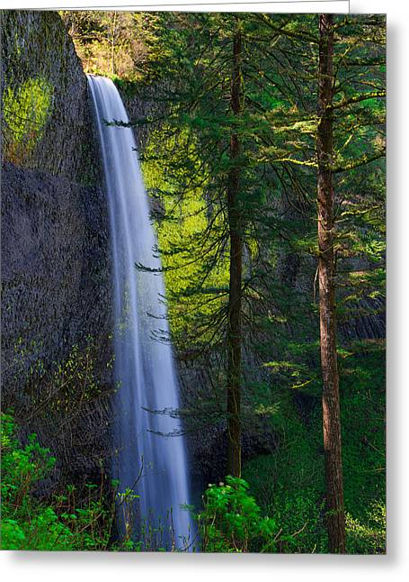 Shade Photographs Greeting Cards - Forest Mist Greeting Card by Chad Dutson