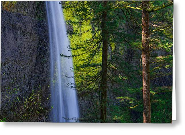Forest Mist Greeting Card by Chad Dutson