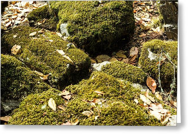 Calistoga Greeting Cards - Forest Moss Greeting Card by Suzanne Luft