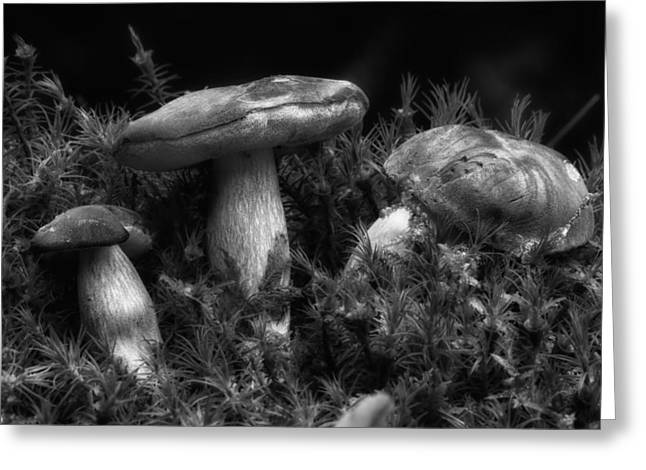 Toadstools Greeting Cards - Forest Mushrooms Greeting Card by Mountain Dreams