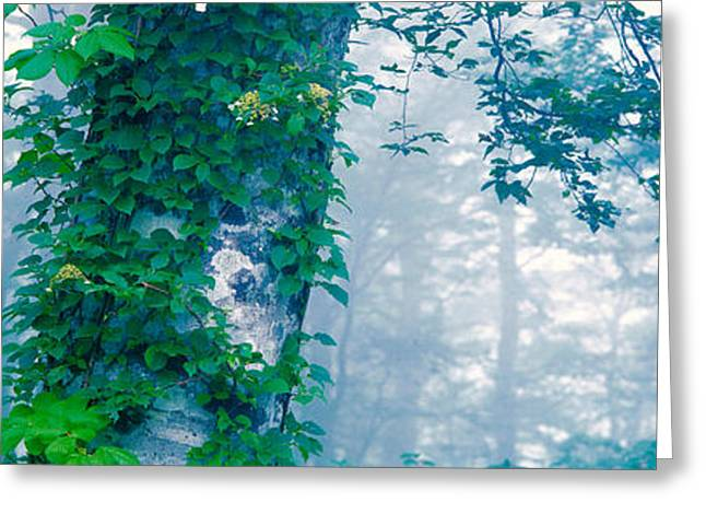 Green Foliage Photographs Greeting Cards - Forest Nagano Kijimadaira-mura Japan Greeting Card by Panoramic Images