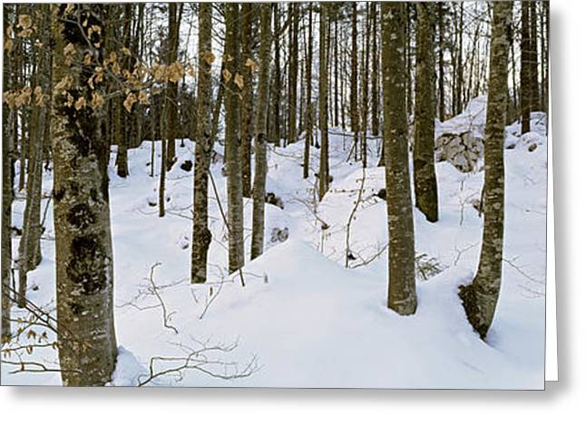 Bled Greeting Cards - Forest Near Lake Bled, Upper Carniola Greeting Card by Panoramic Images