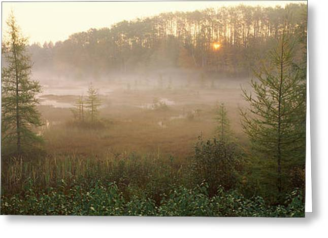 Midwest Scenes Greeting Cards - Forest, Northern Highland-american Greeting Card by Panoramic Images