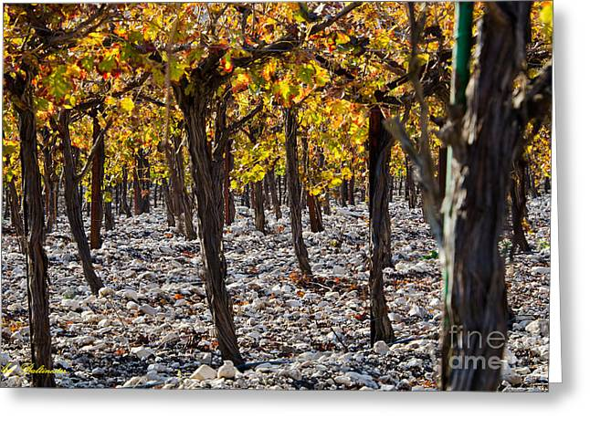 Color Photography Greeting Cards - Forest of vines Greeting Card by Arik Baltinester