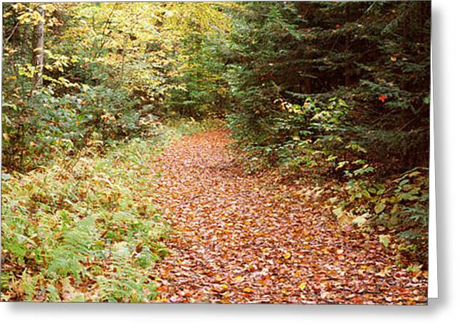 Forest, Old Forge, Herkimer County, New Greeting Card by Panoramic Images