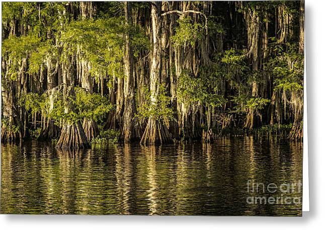 Forest On Caddo Lake Greeting Card by Tamyra Ayles