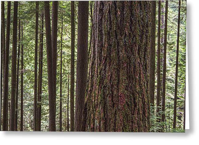 North Vancouver Photographs Greeting Cards - Forest On The Hillside Of Grouse Greeting Card by Robert Postma