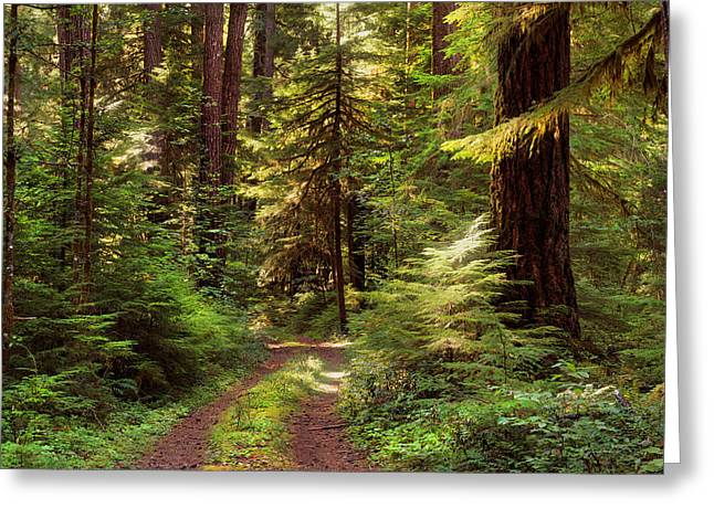 Forest Path 4 Greeting Card by Leland D Howard