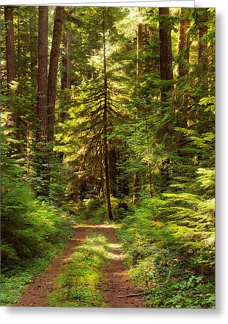 Forest Path 5 Greeting Card by Leland D Howard