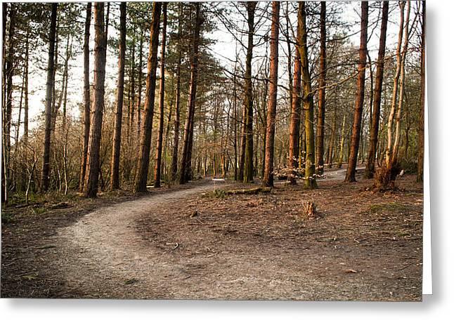 Ben Davis Greeting Cards - Forest Path Greeting Card by Ben Davis