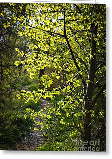 Hiking Greeting Cards - Forest path Greeting Card by Elena Elisseeva
