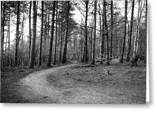 Ben Davis Greeting Cards - Forest Path II Greeting Card by Ben Davis