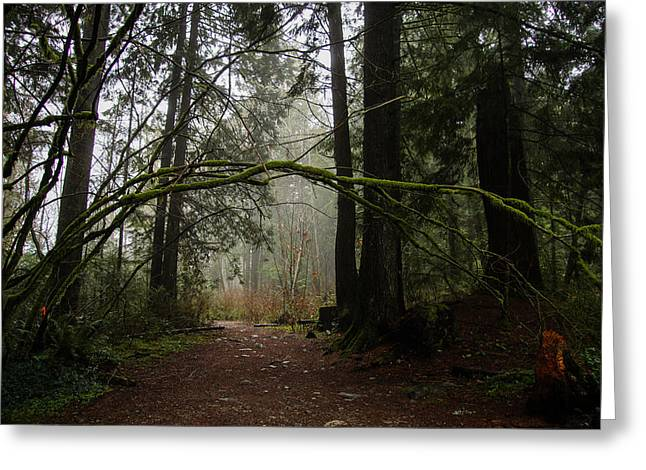 Moss Greeting Cards - Forest Path in Vancouvers Temperate Rainforest Greeting Card by Georgia Mizuleva