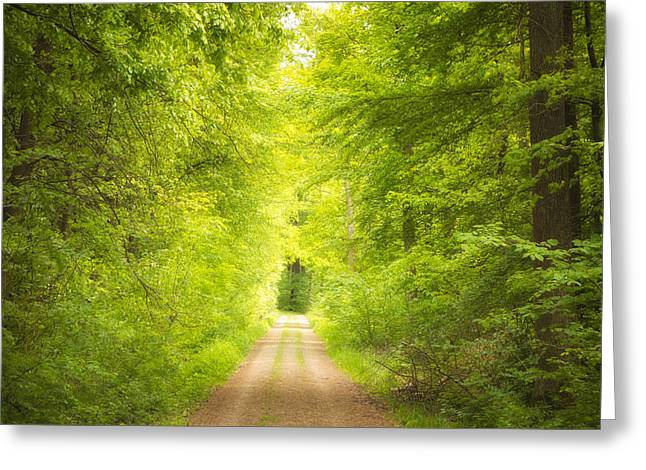 Fresh Green Greeting Cards - Forest path leading into the light Greeting Card by Matthias Hauser