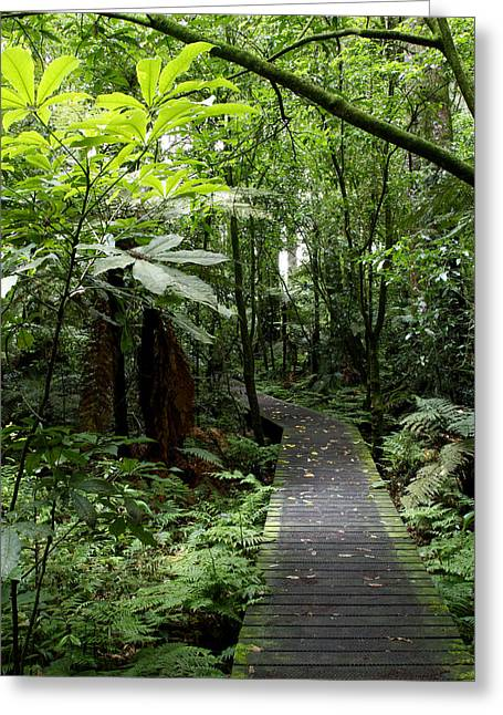 Boardwalk Greeting Cards - Forest path Greeting Card by Les Cunliffe
