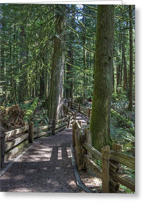 Cedar Fence Greeting Cards - Forest Path Greeting Card by Randy Hall