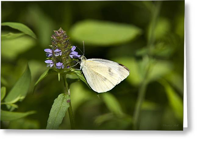 Butterfly On Flower Greeting Cards - Forest Pearl Butterfly Greeting Card by Christina Rollo
