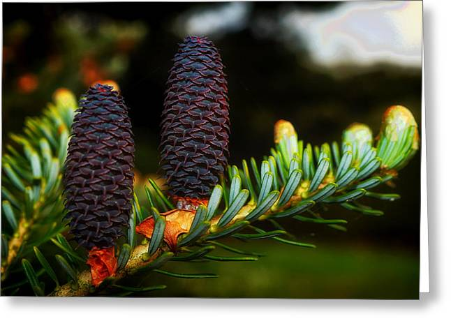 Forest Pine Cones Greeting Card by Mountain Dreams