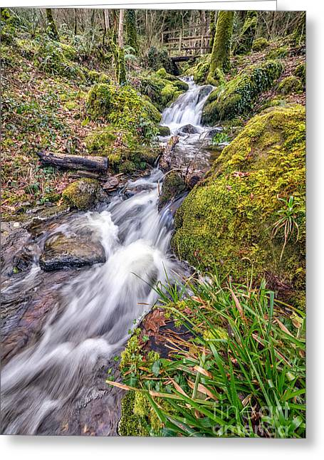 Fall Grass Greeting Cards - Forest Rapids Greeting Card by Adrian Evans